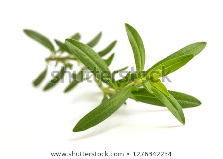 erva · planta · alumínio · pote · folha · isolado - foto stock © klinker