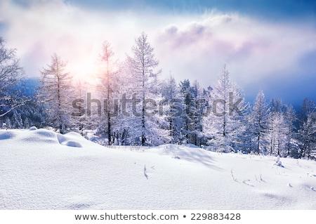 Magnífico inverno paisagem um noite céu Foto stock © mariephoto