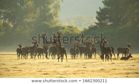çok vahşi hayvanlar alan örnek doğa manzara Stok fotoğraf © bluering