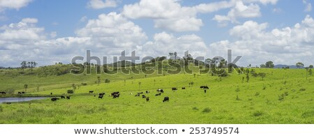Australian Agriculture Beef Cattle Panorama Landscape Stock photo © sherjaca