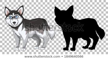 ハスキー 犬 透明な 実例 自然 背景 ストックフォト © bluering