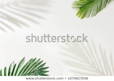 bright colors palm leaves border background flat style stock photo © alexmillos