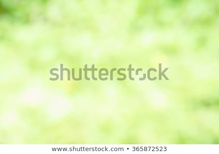Confine fiori verde gradiente abstract Foto d'archivio © adamson