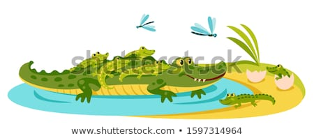 Hatched crocodile from egg isolated. Vector illustration Stock photo © popaukropa