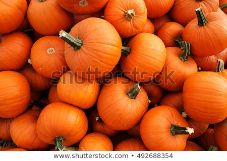 Pile of pumpkins Stock photo © dash