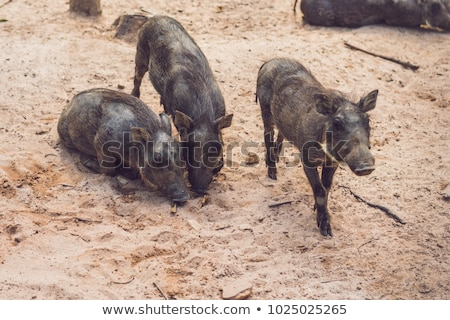 Family of warthogs rest on the ground Stock photo © galitskaya