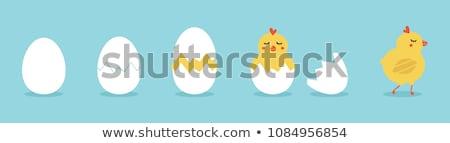 смешные желтый куриного яйцо изолированный Сток-фото © hittoon