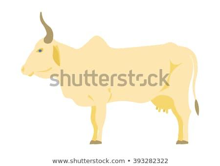 Hindistan inek Hint ikon örnek gıda Stok fotoğraf © marish