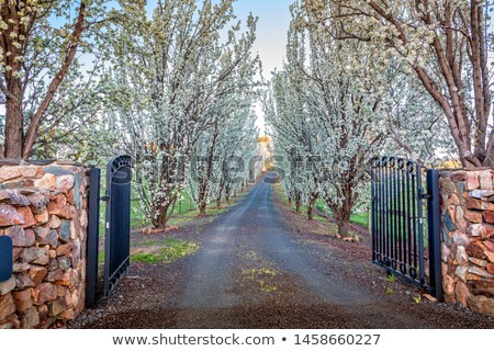 Entrance of tree lined drive way in full flower Stock photo © lovleah