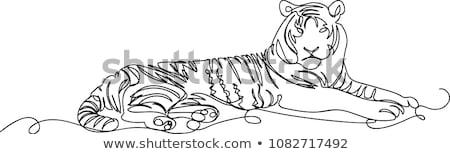 Gepárd vonal feketefehér illusztráció nagymacska fej Stock fotó © patrimonio