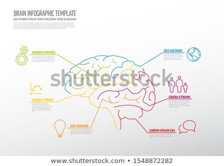 agy · infografika · sablon · vektor · elemek · réteges - stock fotó © orson