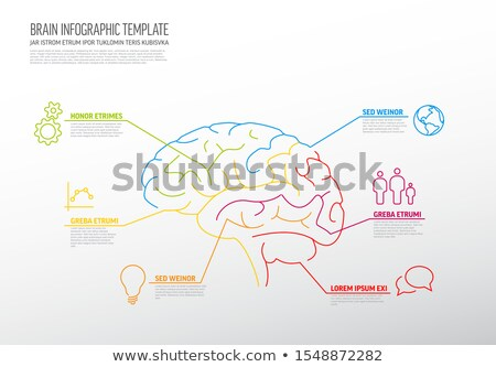 Modelo cérebro humano fino linha vários Foto stock © orson