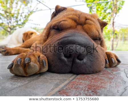 mão · cão · criança · sépia · preto · animal - foto stock © simply