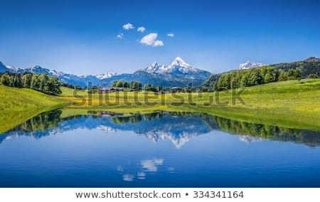 Idílico verano paisaje hierba naturaleza espacio Foto stock © moses
