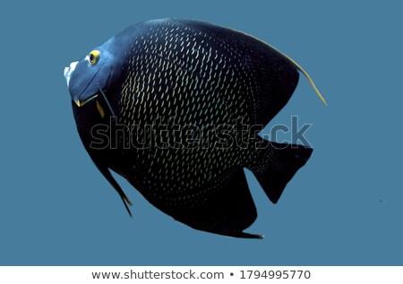 Dominó peces bloques blanco juego equilibrio Foto stock © SRNR