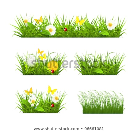 Flowers With Grass Leafs And Ladybug Stock photo © barbaliss