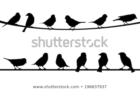 Birds on strings Stock photo © malexandric