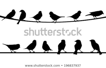 Vögel cute hängen string Baby grünen Stock foto © malexandric