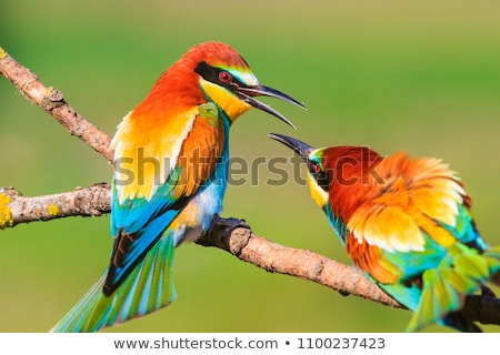 birds flirting on a branch  Stock photo © creative_stock