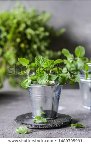 fresco · de · erva · pote · branco · comida - foto stock © deymos