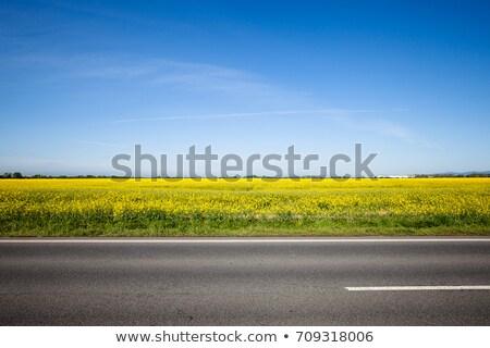 üres vidék út fák mezők fa Stock fotó © grasycho