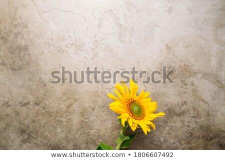 najaar · grens · element · bladeren · vijf · esdoornblad - stockfoto © lightsource