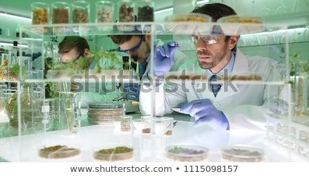 Genético modificación alimentos tecnología ADN estilo de vida Foto stock © ozaiachin