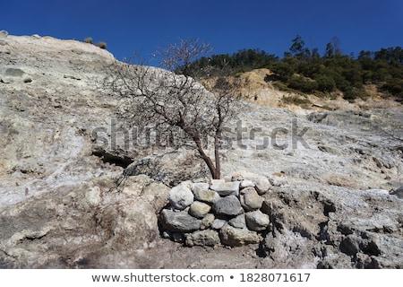 Dąb pozostawia biały drzewo drewna charakter Zdjęcia stock © haraldmuc