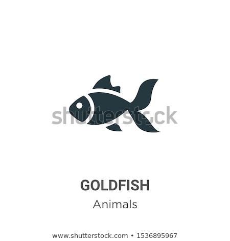 Icon goldfish Stock photo © zzve