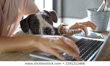 Iş kadını çalışma ev dizüstü bilgisayar içme bilgisayar Stok fotoğraf © bigjohn36