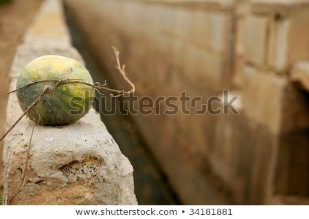 Watermelon over rrigation ditch canal Stock photo © lunamarina