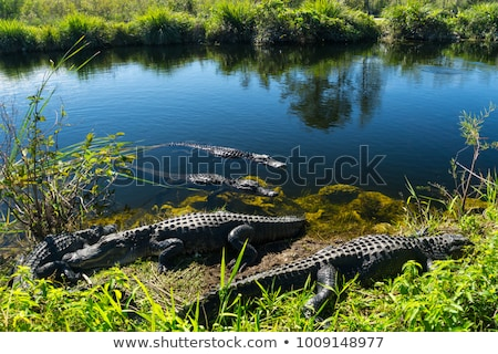 Mangroove river in everglades Florida landscape view, nature Stock photo © lunamarina