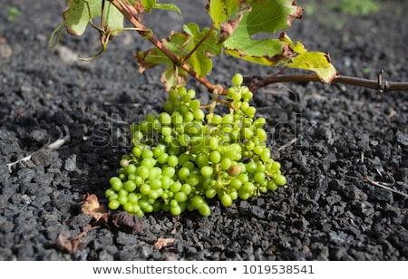 Wijngaard eiland groeiend vulkanisch bodem wijn Stockfoto © meinzahn