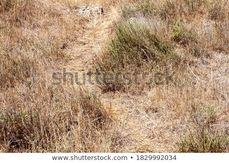Stock photo: Steppe Surface with Dry Grass.