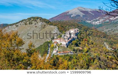 italian brown bear Stock photo © tiero