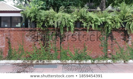 Small flowers growing along the old brick wall Stock photo © michaklootwijk