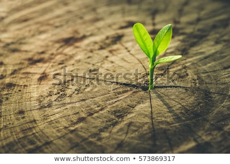 Ambiental ecología tecnología fondo industria hojas Foto stock © Viva