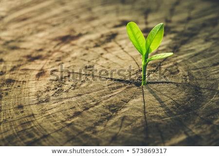 Ambiental ecologia tecnologia fundo indústria folhas Foto stock © Viva