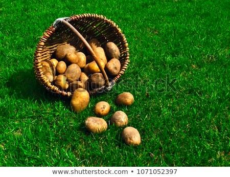patate · erba · vecchio · basket · natura - foto d'archivio © maros_b