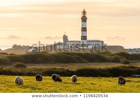 Eiland kustlijn gevaarlijk Frankrijk water landschap Stockfoto © smithore