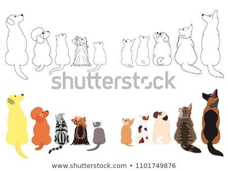 Cute yorkshire terriër puppy omhoog witte Stockfoto © wavebreak_media