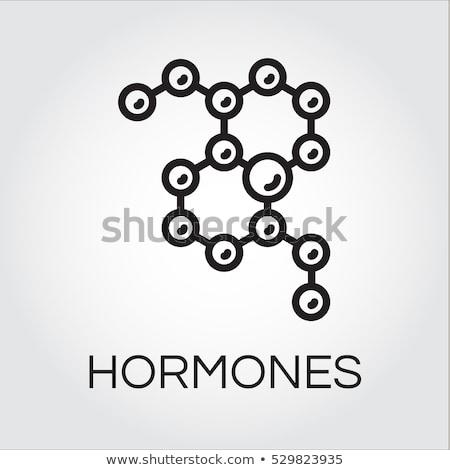 Testosteron structuur medische school model onderwijs Stockfoto © RAStudio