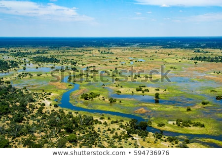 delta · Botswana · elefantii · apă · copac - imagine de stoc © prill