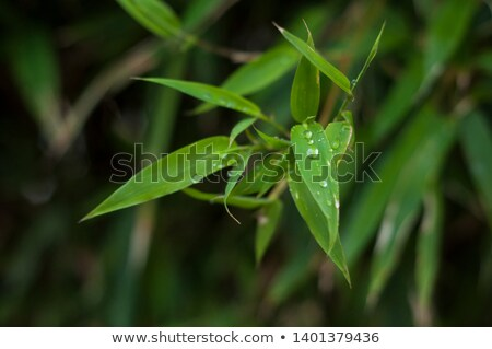 grunge · bambú · papel · árbol · resumen · paisaje - foto stock © ozaiachin