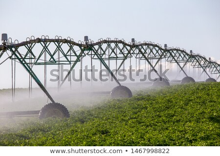 Automated farming irrigation sprinklers Stock photo © stevanovicigor