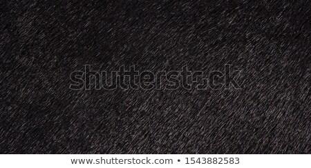 black cow closeup on a farm Stock photo © OleksandrO