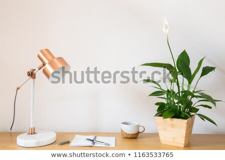 A decorative houseplant Stock photo © bluering