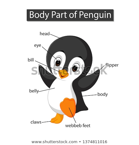 Diagram showing parts of penguin Stock photo © bluering