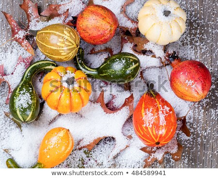 Early snow with autumn pumpkins and leaves on wood Stock photo © tab62