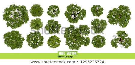 A view of a tree from the top Stock photo © bluering